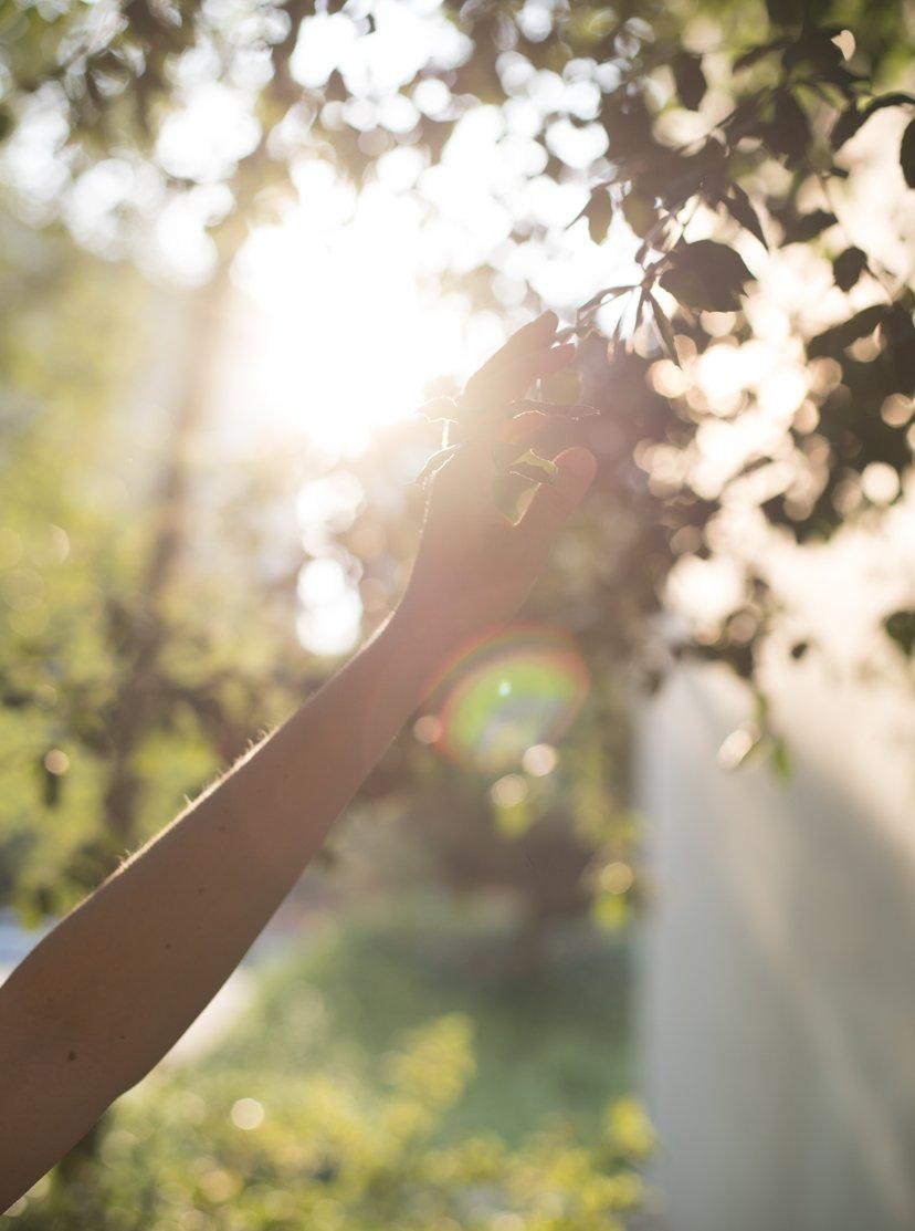 mano tocando hojas de árbol