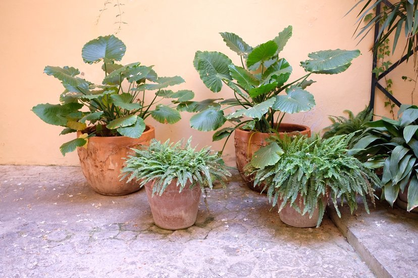 patios con plantas